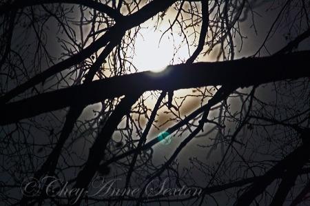 Frosty Moon of November