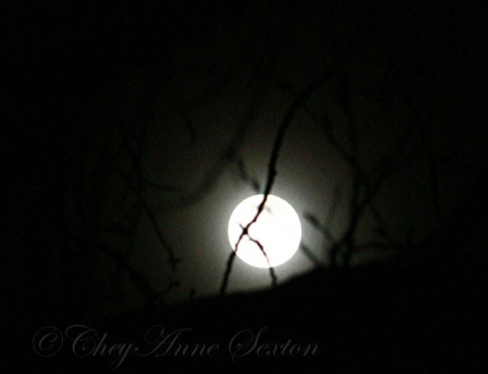November Frosty-Moon 2008