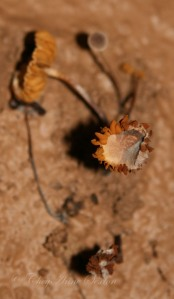 ancient mushroom/flower