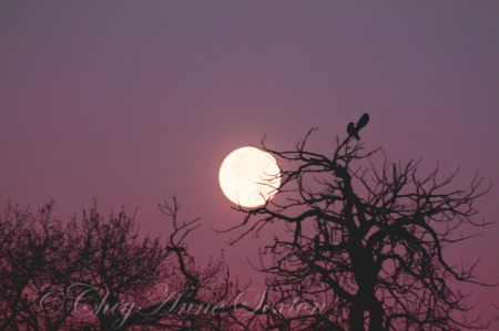 two-crows-in-the-moon