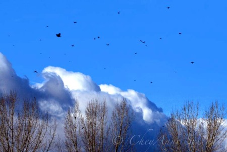 crows before the storm