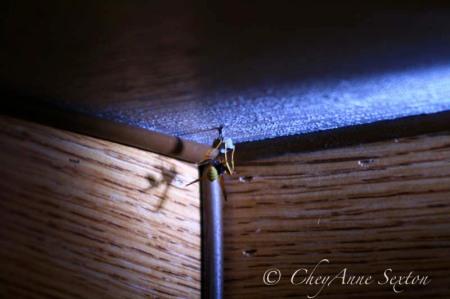 wasp building