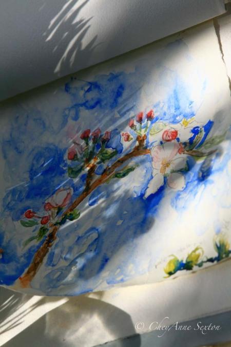 apple blossoms against blue