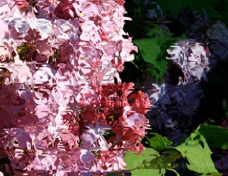 patterns of pink