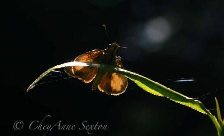 backlit bug