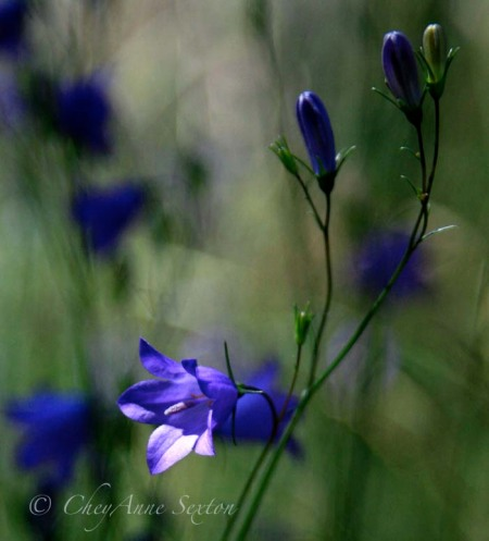 wild blue square