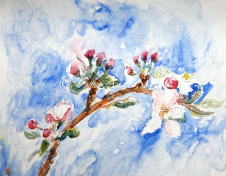 Apple Blossom's of Spring