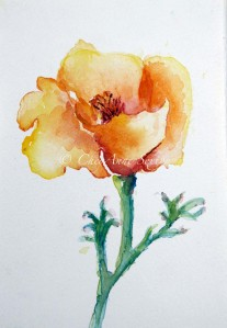 California Poppy, Watercolour Original