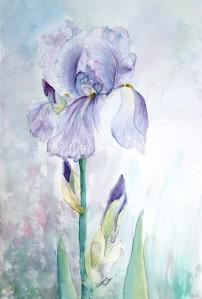 popcicle iris