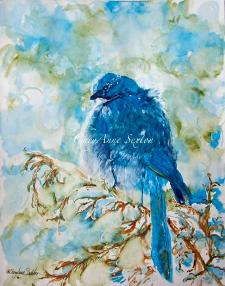 wc Winter Scrub Jay on Juniper on paper by CheyAnne Sexton