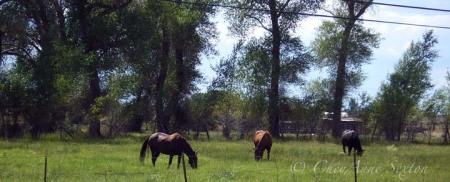 El Prado Ponies