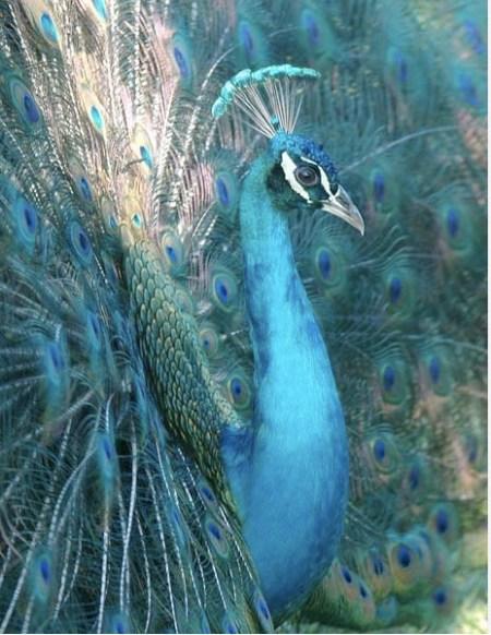 http://steelhead.aecom.yu.edu/birdwebphotos/2006birds/pages/