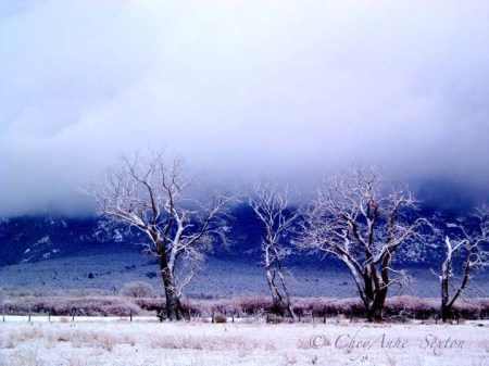 three trees taos