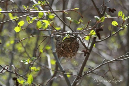little bird nest