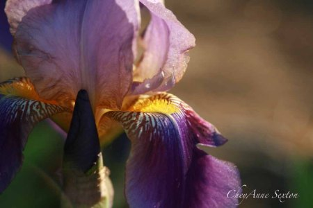 incredible iris and light
