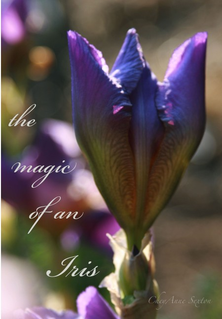 The Magic of an Iris