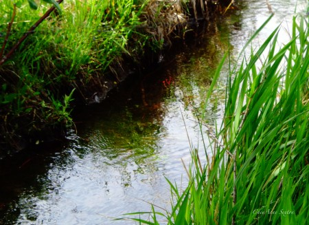 Acequia of Taos, New Mexico