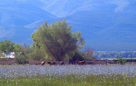 this is what the rains brought, Blue of Taos