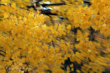 Autumn Colors of Speed drive-by-photography by CheyAnne Sexton