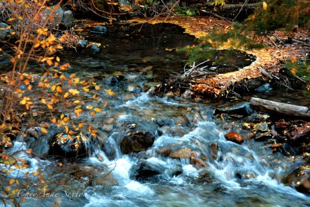 Twinning Creek out of Taos Ski Valley, Autumn 2013 by cheyannesexton