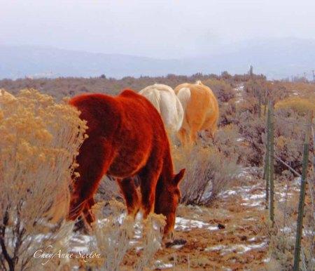 3 Pueblo Ponies by CheyAnne Sexton