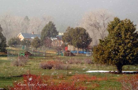 sheep barn farm through the snow flurries