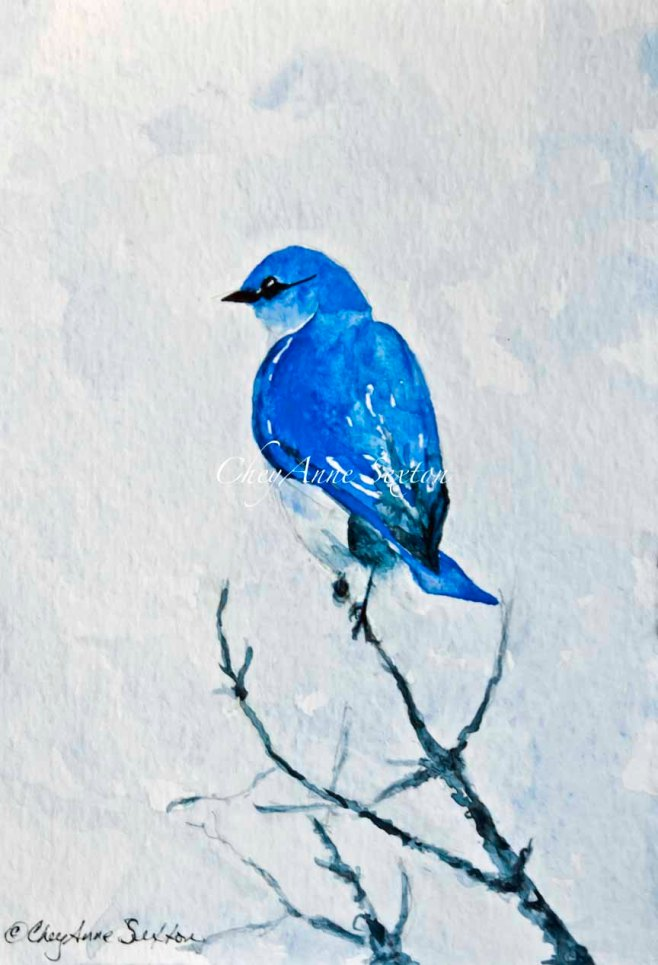 "BlueBird ""Out on a Limb' - watercolour on paper  by CheyAnne Sexton"