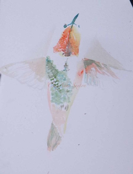 12th watercolour - Rufous in Angel mode