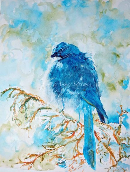 Winter Scrub jay on Juniper w/Snow by CheyAnne Sexton watercolour on Paper